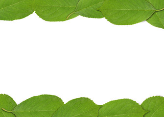 Frame made of green spring cherry tree leaf