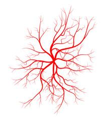 Human vein, vessel vector symbol icon design.