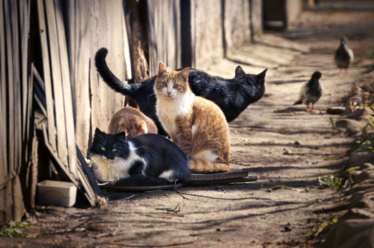 A group of homeless cats on the city street hunts pigeons. A red cat looks smart.