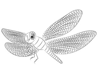 Hand Drawn Funny Dragonfly. Children Drawing of Cute Insect. Sketch Style. Vector Illustration.