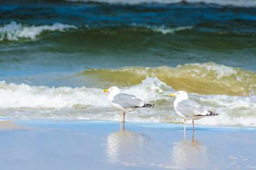 Möwenpaar vor Wellen