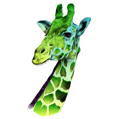 the head of a giraffe sketch vector graphics color drawing of a green and blue