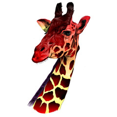 the head of a giraffe sketch vector graphics color drawing of red and yellow
