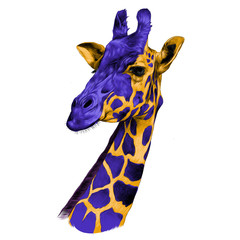 the head of a giraffe sketch vector graphics color drawing of a yellow and purple