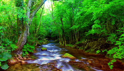 Fast mountain river flowing among mossy stones and boulders in green forest. Carpathians,