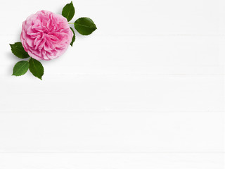 Styled stock photo. Feminine wedding desktop mockup with pink English rose flower and empty space. Floral composition on old white wooden background. Top view. Flat lay picture.
