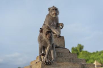 Monkeys on Bali.