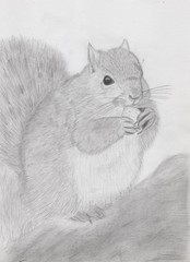 Белка с орешком, нарисованная карандашом