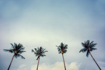 Four palm trees against blue sky