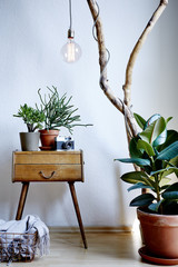 living room design vintage and modern mix with plenty of plants in sunny atmosphere