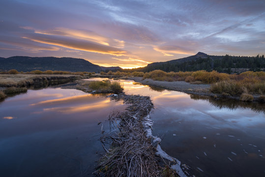 A beaver dam stretches out on the West Fork Carson River during a beautiful sunrise in the fall in Hope Valley, California.
