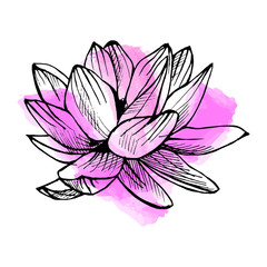 Hand drawn lotus on watercolor background in a sketch style. Floral collection.