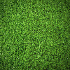 Tuinposter Gras Nature background of green textured grass for abstraction