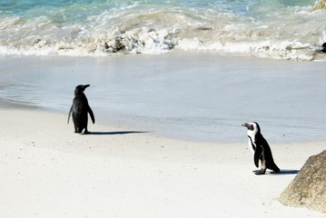 Couple of penguins at Cape Peninsula