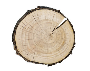Smooth cross section of brown tree stump slice. Annual rings on large piece of wood cut fresh from the forest with cracks and grain isolated on white.
