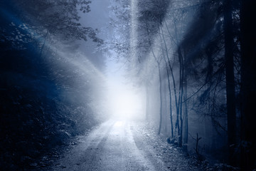 Blurred foggy magical sun rays in forest road. Lovely blue color filter used.