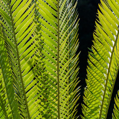Green plant leaves background