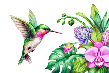 watercolor illustration, exotic nature, flying humming bird, tropical orchid flower, green leaves, isolated on white background