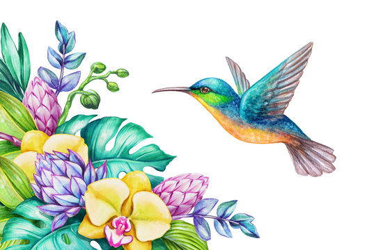 watercolor illustration, exotic nature, flying humming bird, tropical orchid flowers, green jungle leaves, isolated on white background