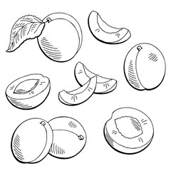 Apricot fruit graphic black white isolated sketch illustration vector