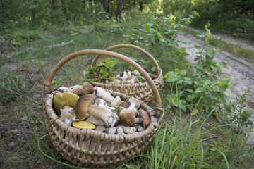In the summer in the forest there are two full baskets with edible mushrooms and strawberries.