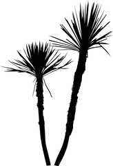 two black small palm trees isolated on white