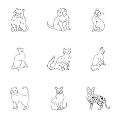Collection of cats in one picture. Different cats in one picture. Cat breeds icon in set collection on outline style vector symbol stock illustration.
