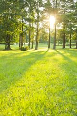 公園 太陽光
