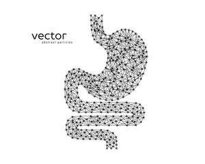 Abstract vector illustration of human stomach.