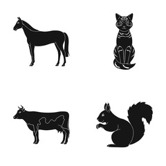 Horse, cow, cat, squirrel and other kinds of animals.Animals set collection icons in black style vector symbol stock illustration web.