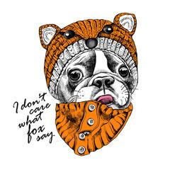 French Bulldog portrait in a fox hat. Vector illustration.