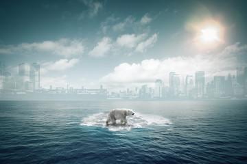 Ours polaire sur une petite banquise au milieu de l'océan
