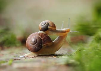 Snails crawling at the ground small snail sitting at the big kissing and hugging