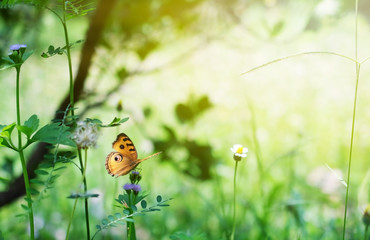 butterfly in  garden on background