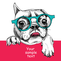 Card template with portrait of a French bulldog in glasses. Vector illustration.