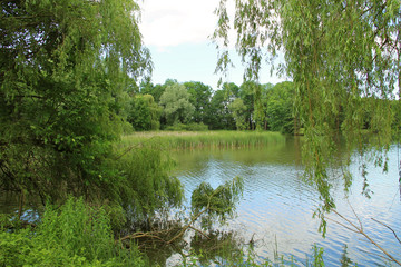 Wall Mural - pond with green trees and reed on its banks in summer, Poodri, Czech Republic