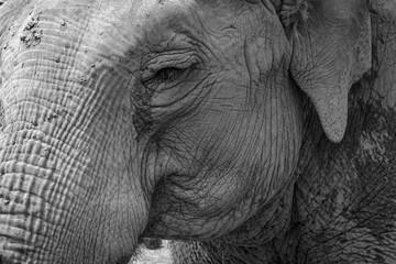 Elefantenhaut, Nahaufnahme, Krefelder Zoo