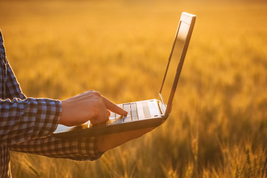 Businessman is on a field of ripe wheat and holds a laptop in his hands. The concept of the agricultural business.