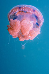 Close-Up Of Jellyfish Underwater