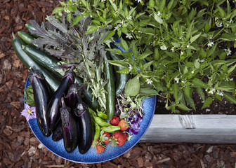Organic vegetables in chef's garden