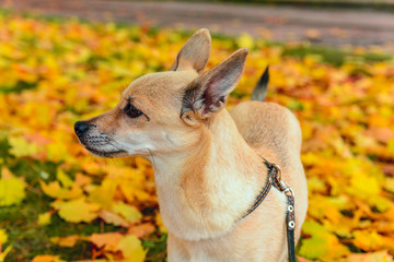 A dog on yellow leaves