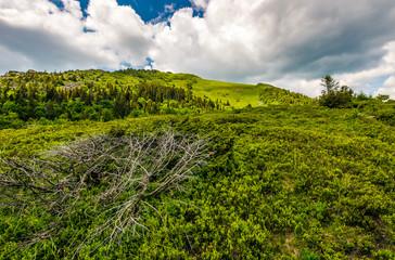 grassy meadow on hillside of mountain range