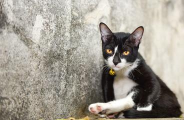 Lovely Black Cat Relax On Floor,Thailand.