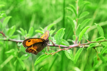 Orange butterfly on tree branch with green leaves