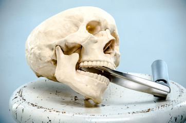 A model of the human skull with a laryngoscope in the mouth.