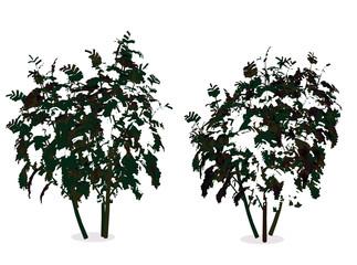 illustration of tree, plant silhouette