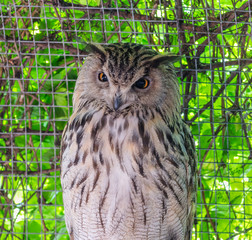 Close up, vertical photo of wild owl in zoo