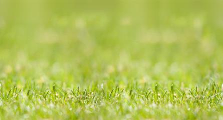 Gras: Seamless Pattern, nahtlos verlängerbar