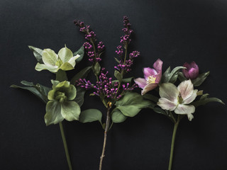 Close up of three flower stems on black background