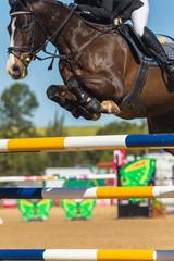 Horse Jumping Rider Closeup